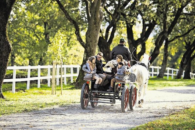 Kobilarna Lipica: prost vstop na Prešernov dan