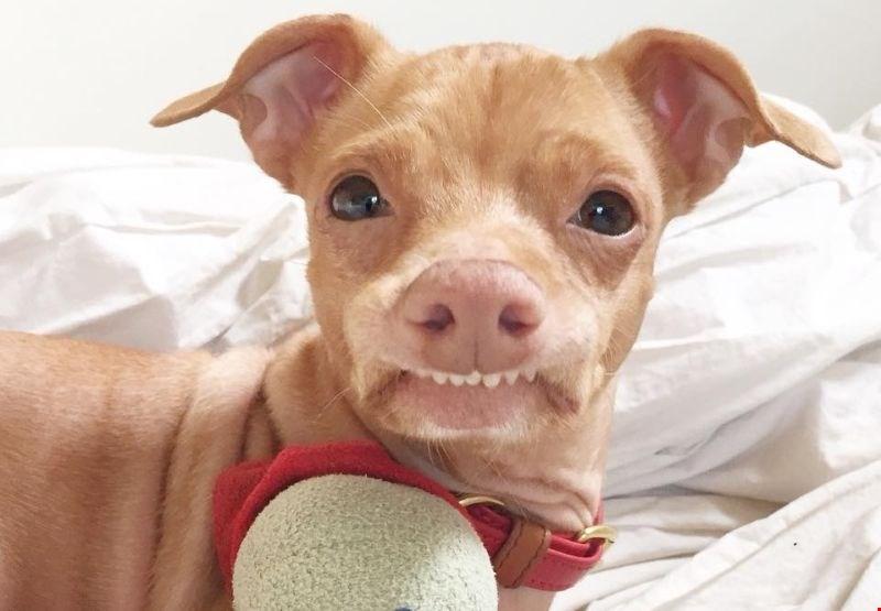 Bi vaš pes lahko postal zvezdnik družbenih omrežij?
